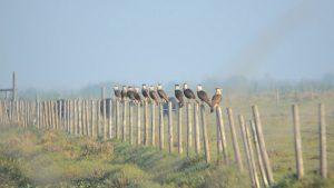 Birding Adventures Eps 4