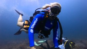 Diving in the Palm Beaches