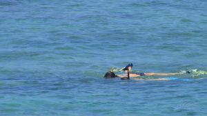 Snorkeling in the Palm Beaches