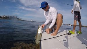 Palm Beach Inlet Snook