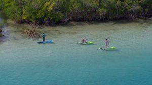 The Wild Palm Beaches